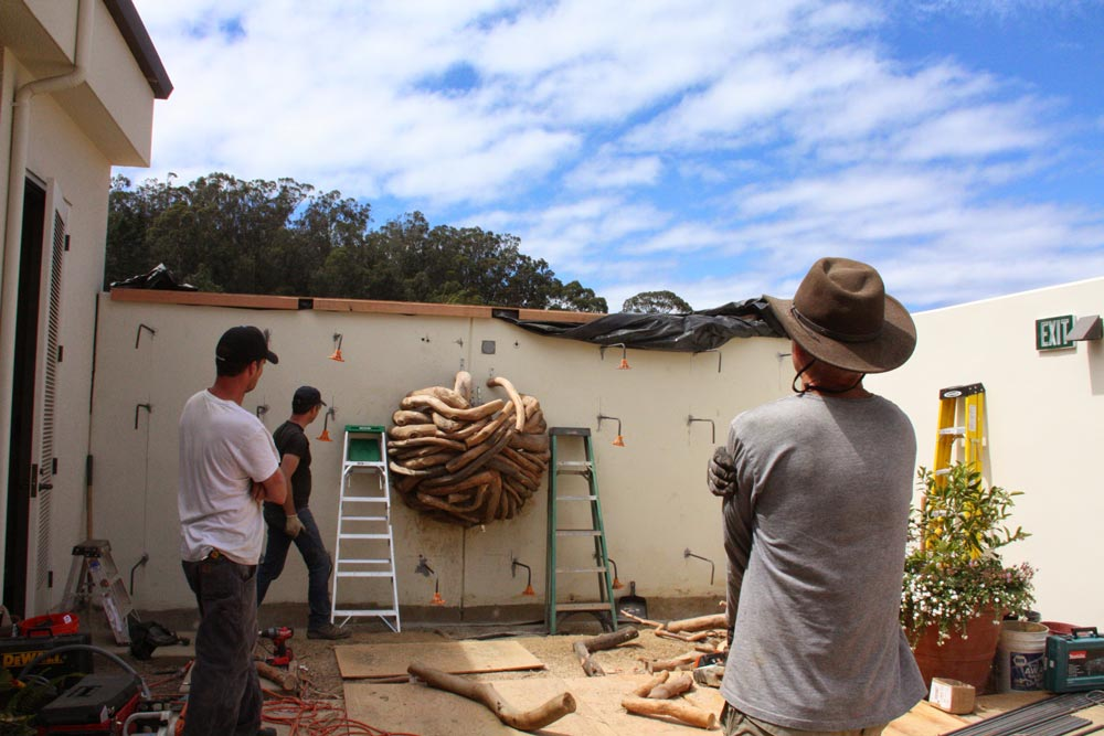Eucalyptus branches from the Presidio installed before the formwork for the rammed earth wall is installed.