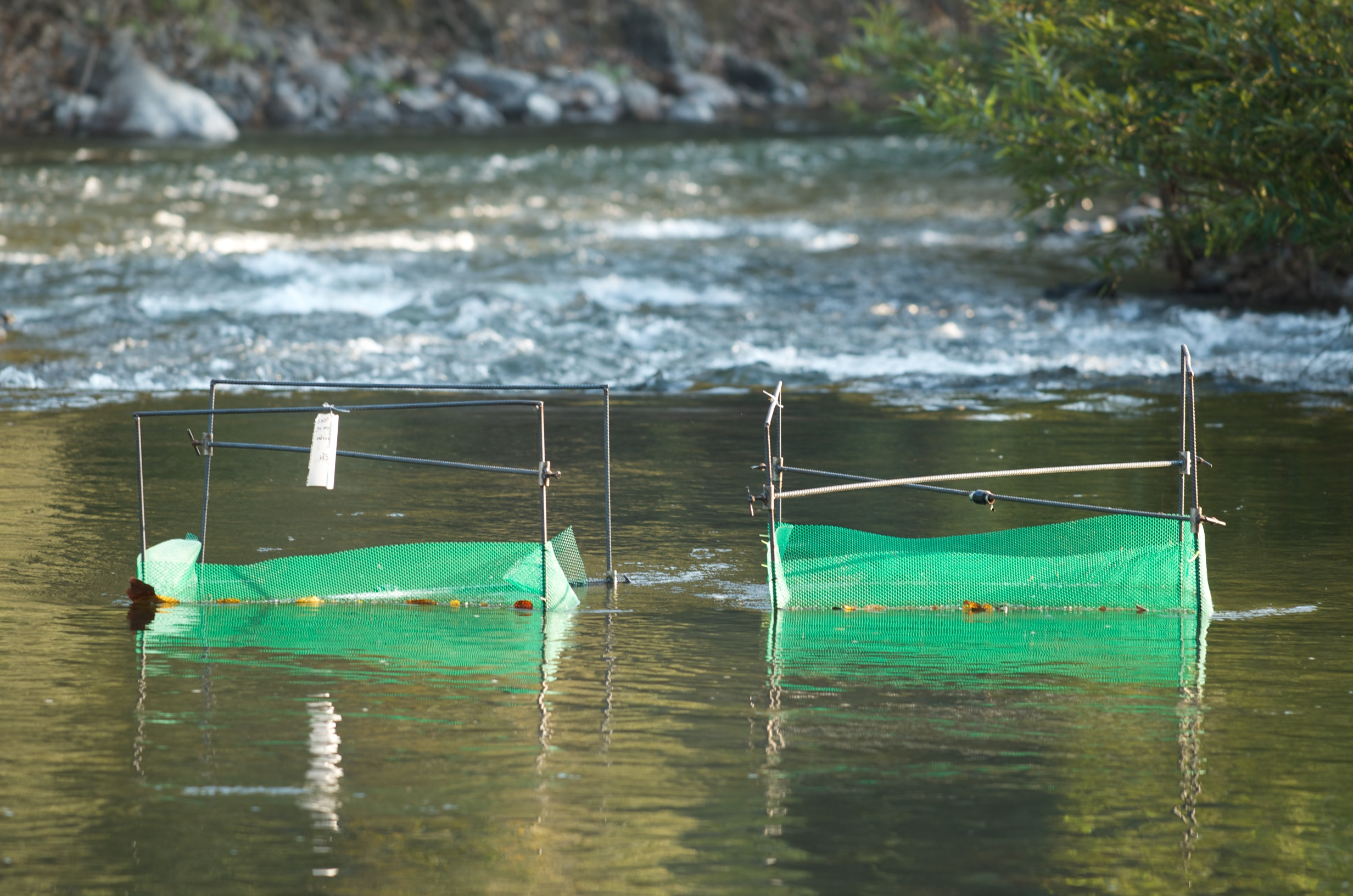One of 12 pairs of fish exclosures and open exclosure controls used to test the role of fish in the Ngao River ecosystem.