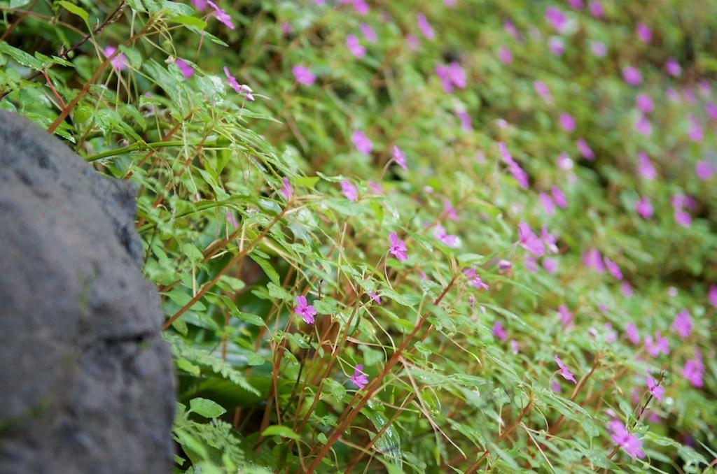 Pha Taem flowers.jpg