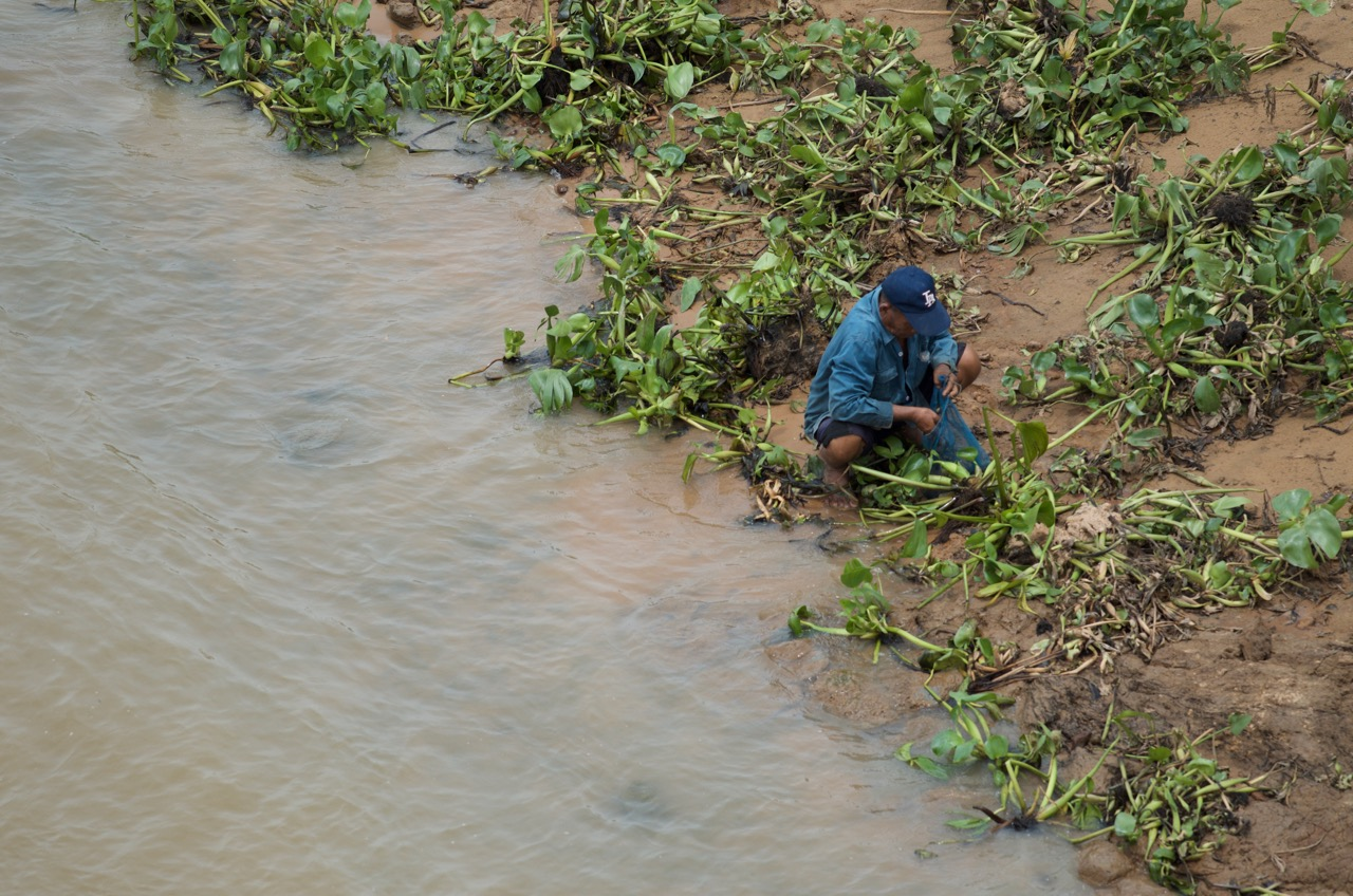 Mun River, Thailand | Many people throughout Southeast Asia depend on rivers to provide them with food. This man is collecting snails and aquatic insects from these water plants.