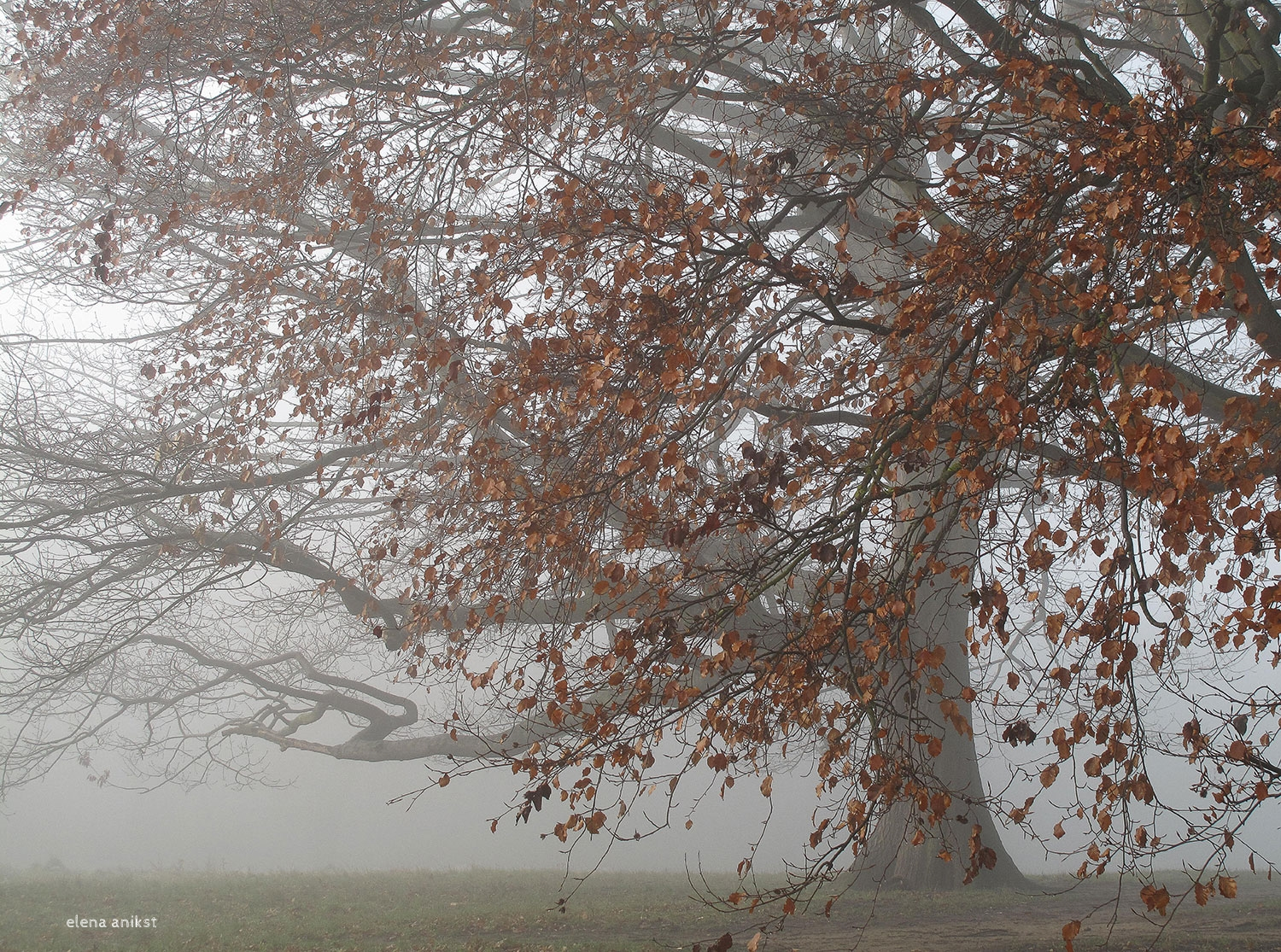 Fog in Hampstead Heath