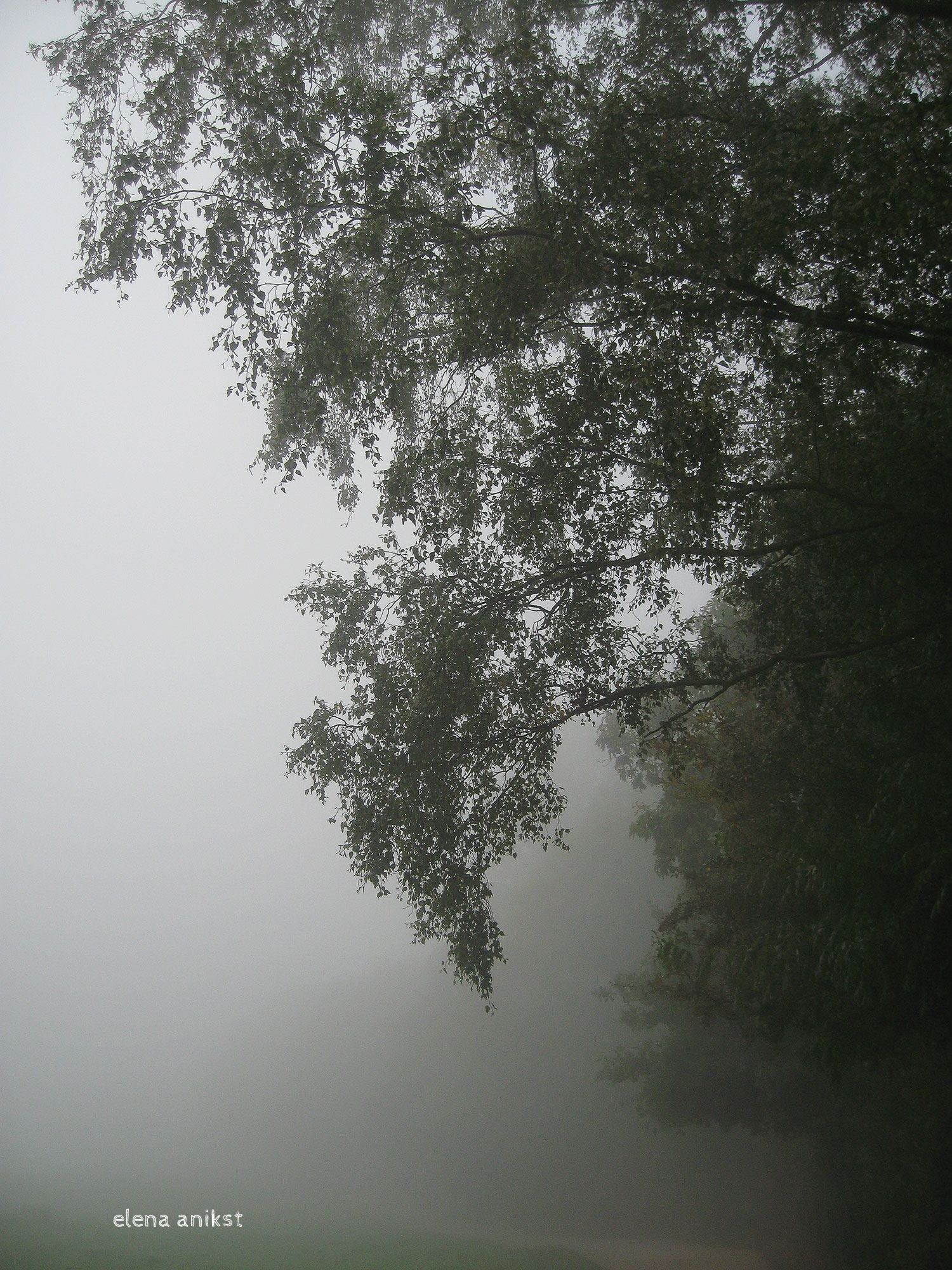 Hampstead Heath 2008