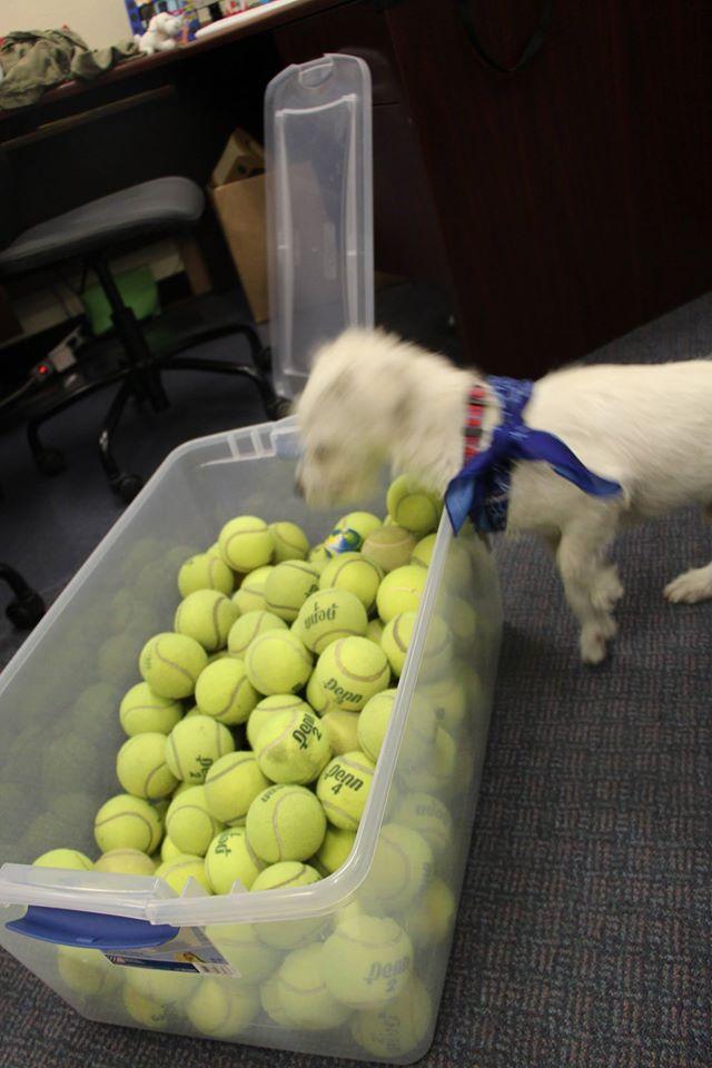 doantion tennis balls2.jpg