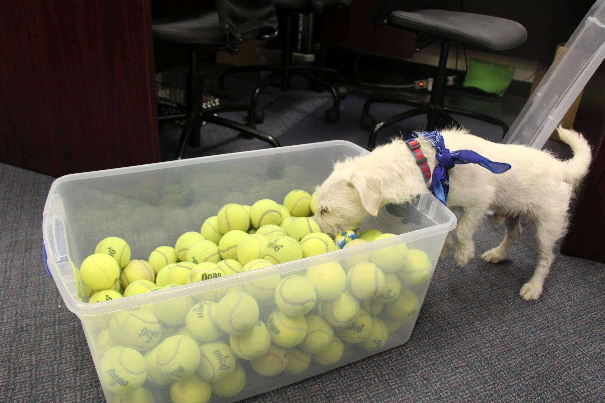 doantion tennis balls3.jpg