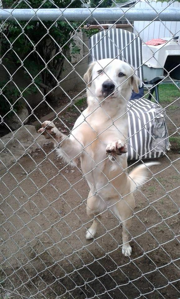 pet rescue pic 2.jpg