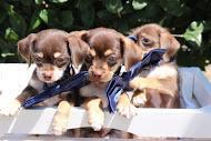 jennies+puppies.png