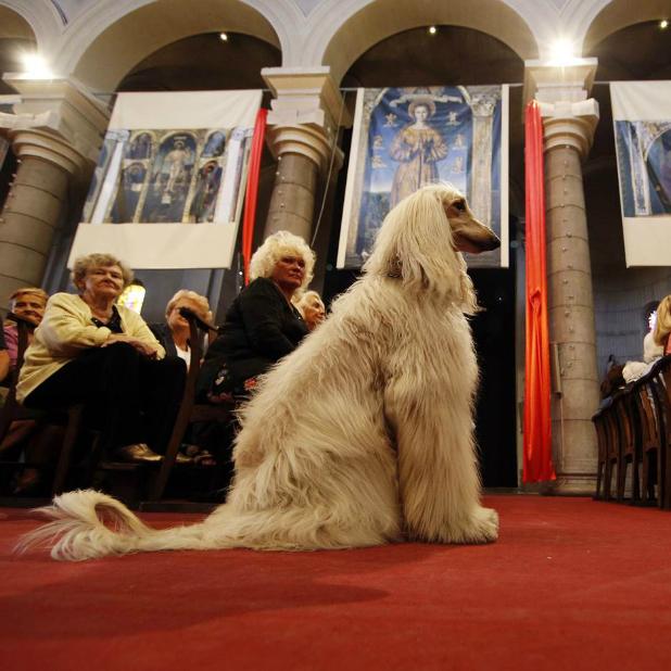dog-atchurch8c9295883-pb-131006-animal-blessing-nj-03.jpg
