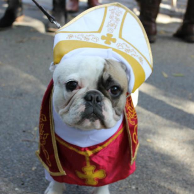 dog-dog-o-POPE-570.jpg