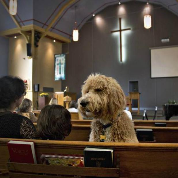 luke-animal-blessing-3-church.jpg