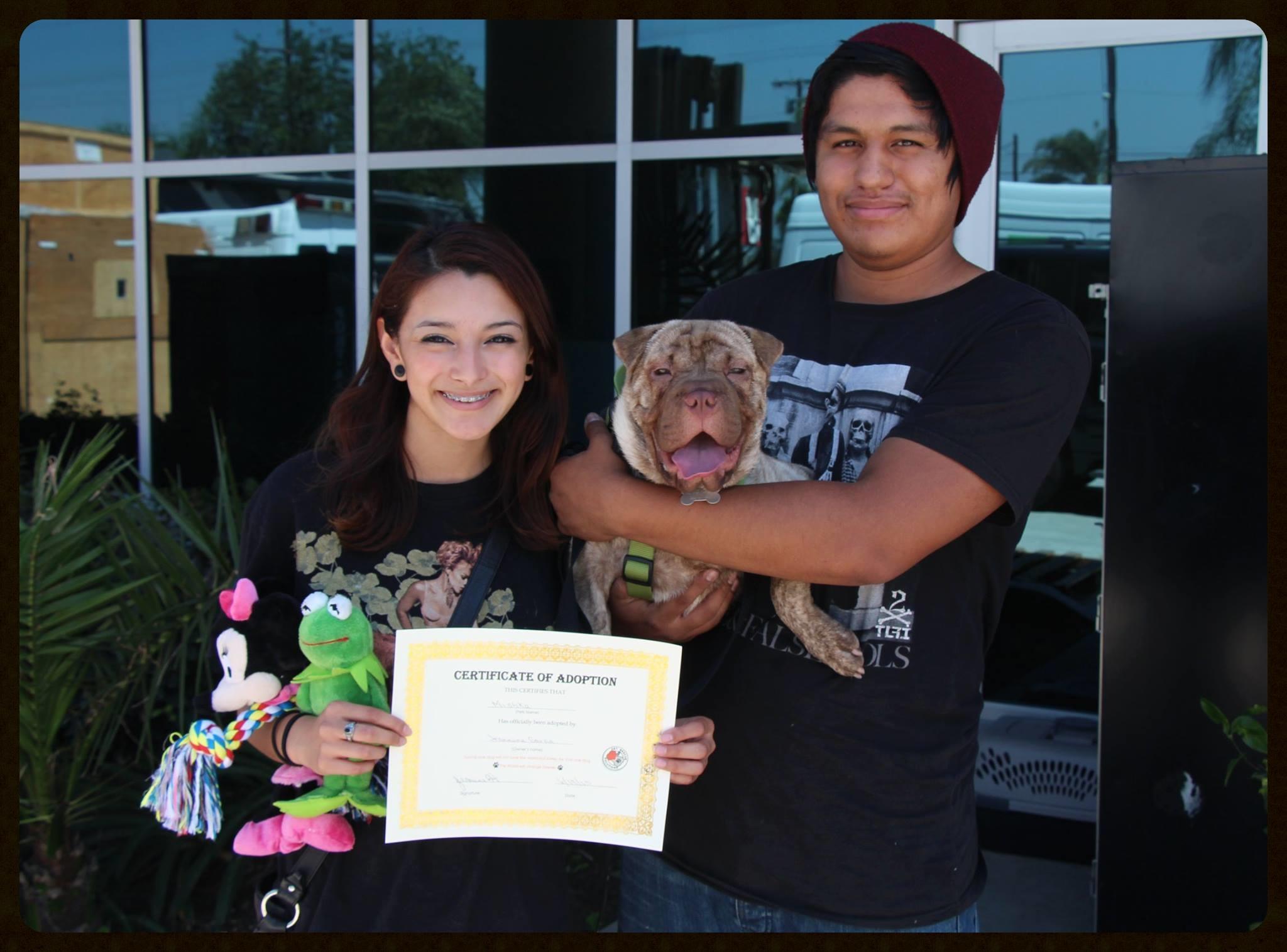 Mishka Adoption Photo