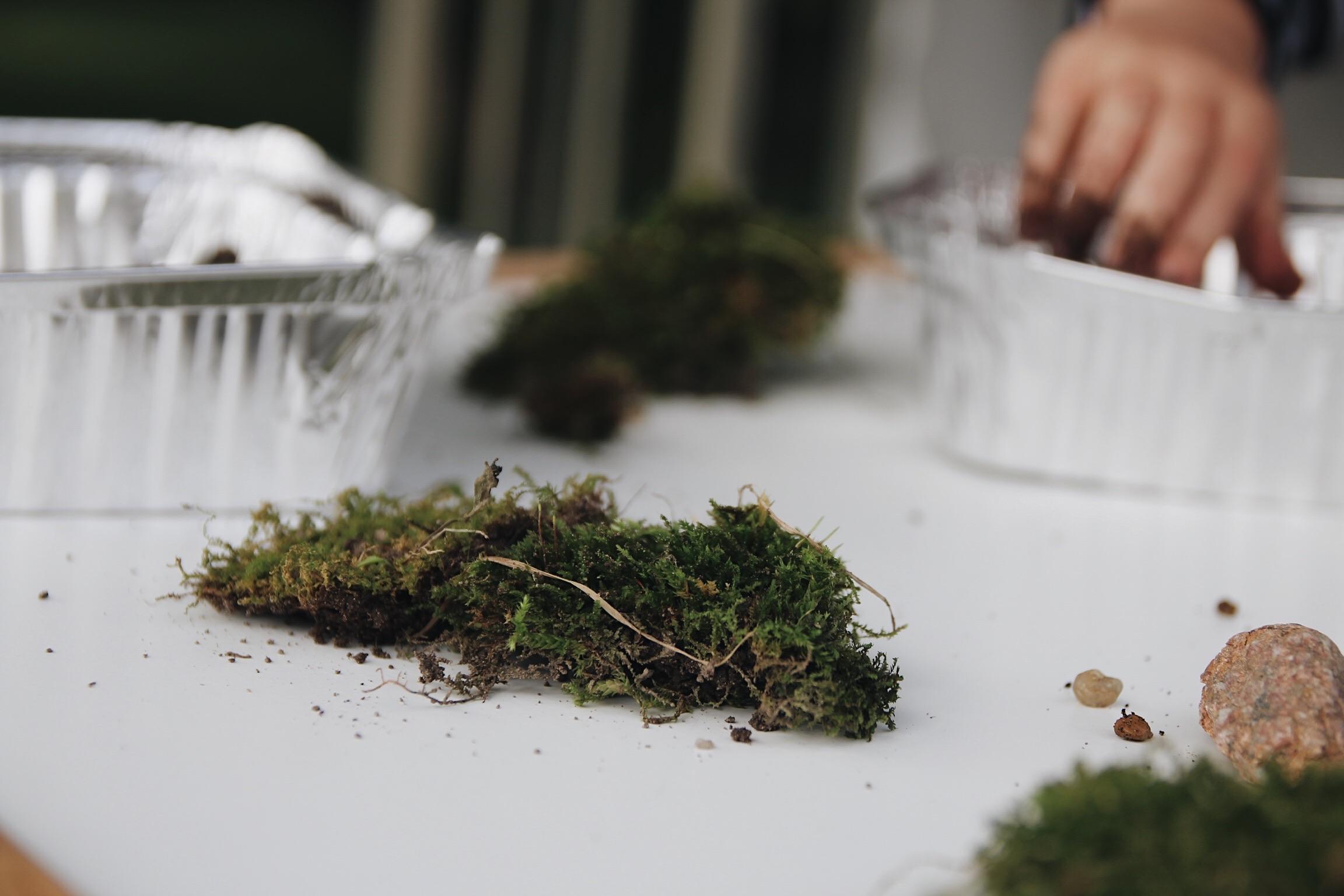 moss_terrariums_this_little_hill.jpg