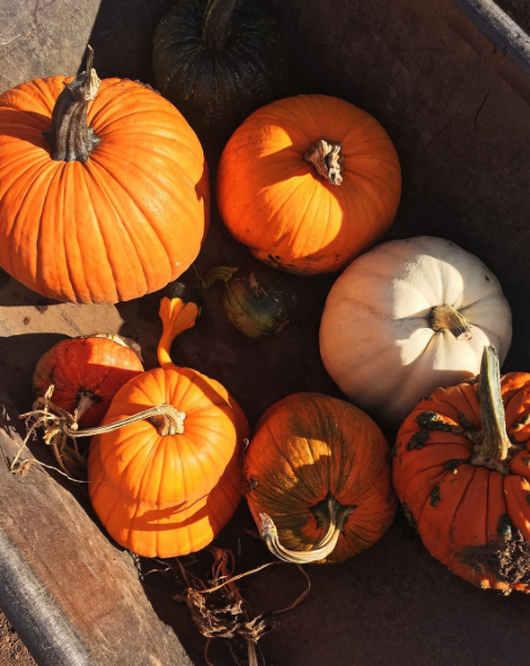 Pumpkin Patch 2 | Writing Between Pauses