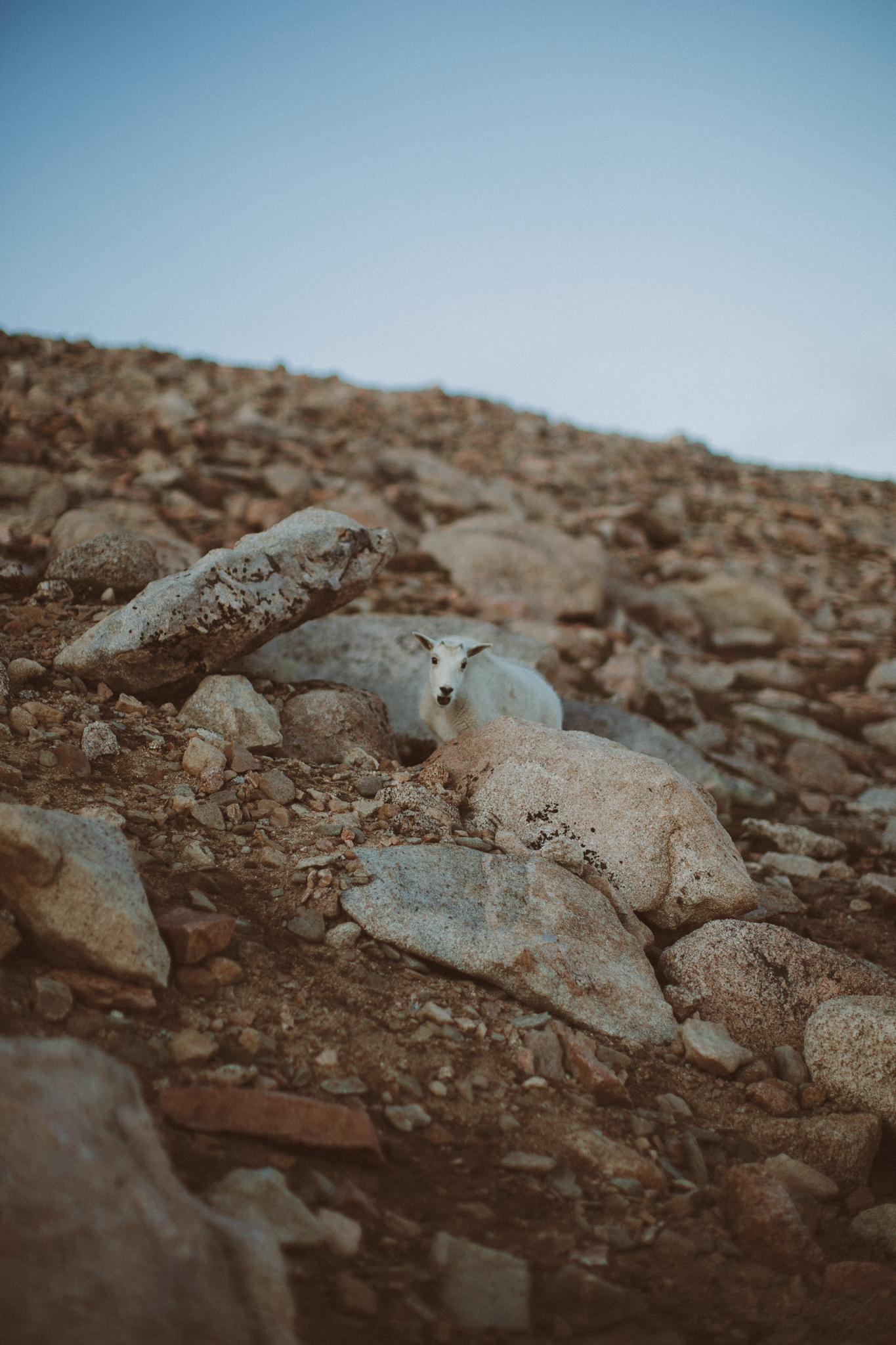 Colorado Mountain Wedding Photographer-7.jpg