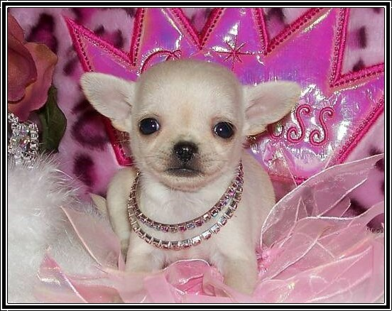 puppy-princess.jpg