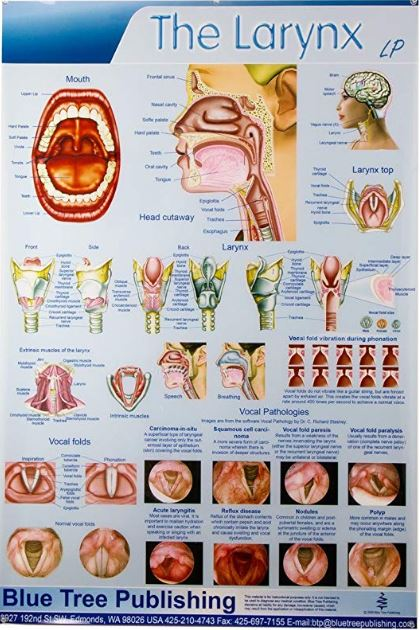 Click Picture to order This Larynx Poster with my Amazon Affiliate Link