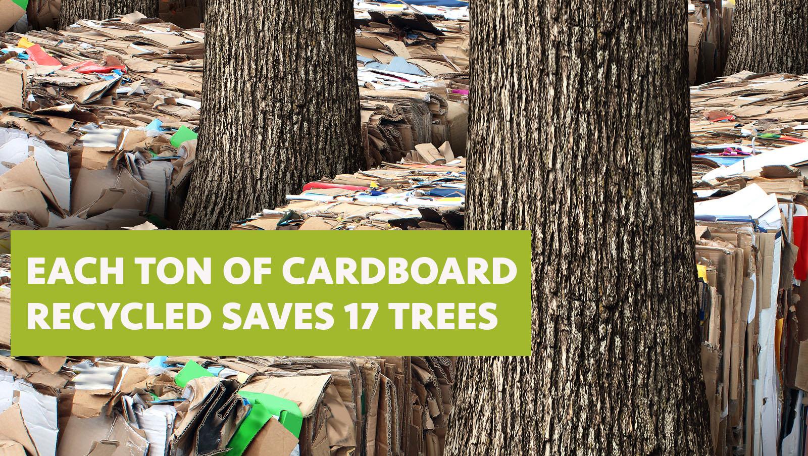 recycle trees.jpg