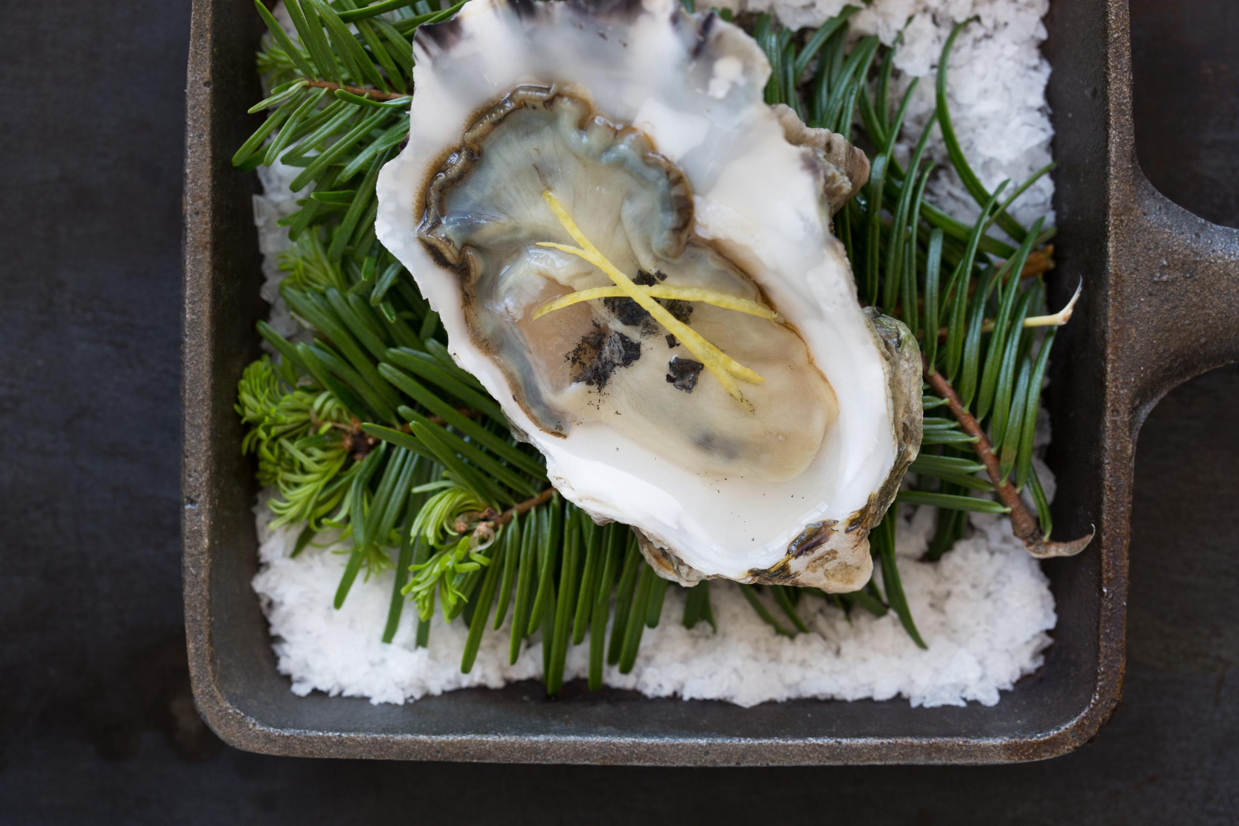 raw oyster.jpg