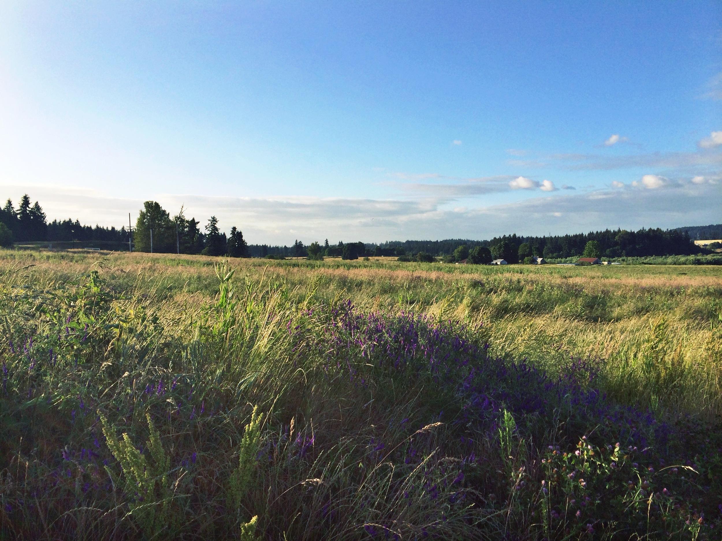 openfield.jpg