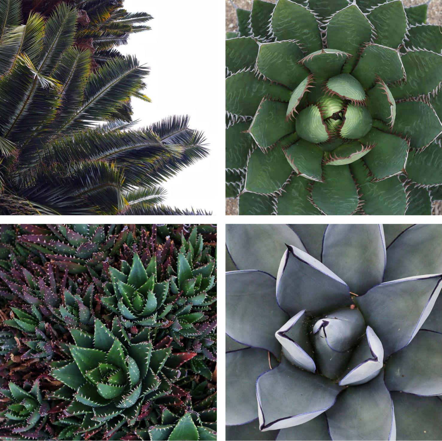 plantsofSantaBarbara.jpg
