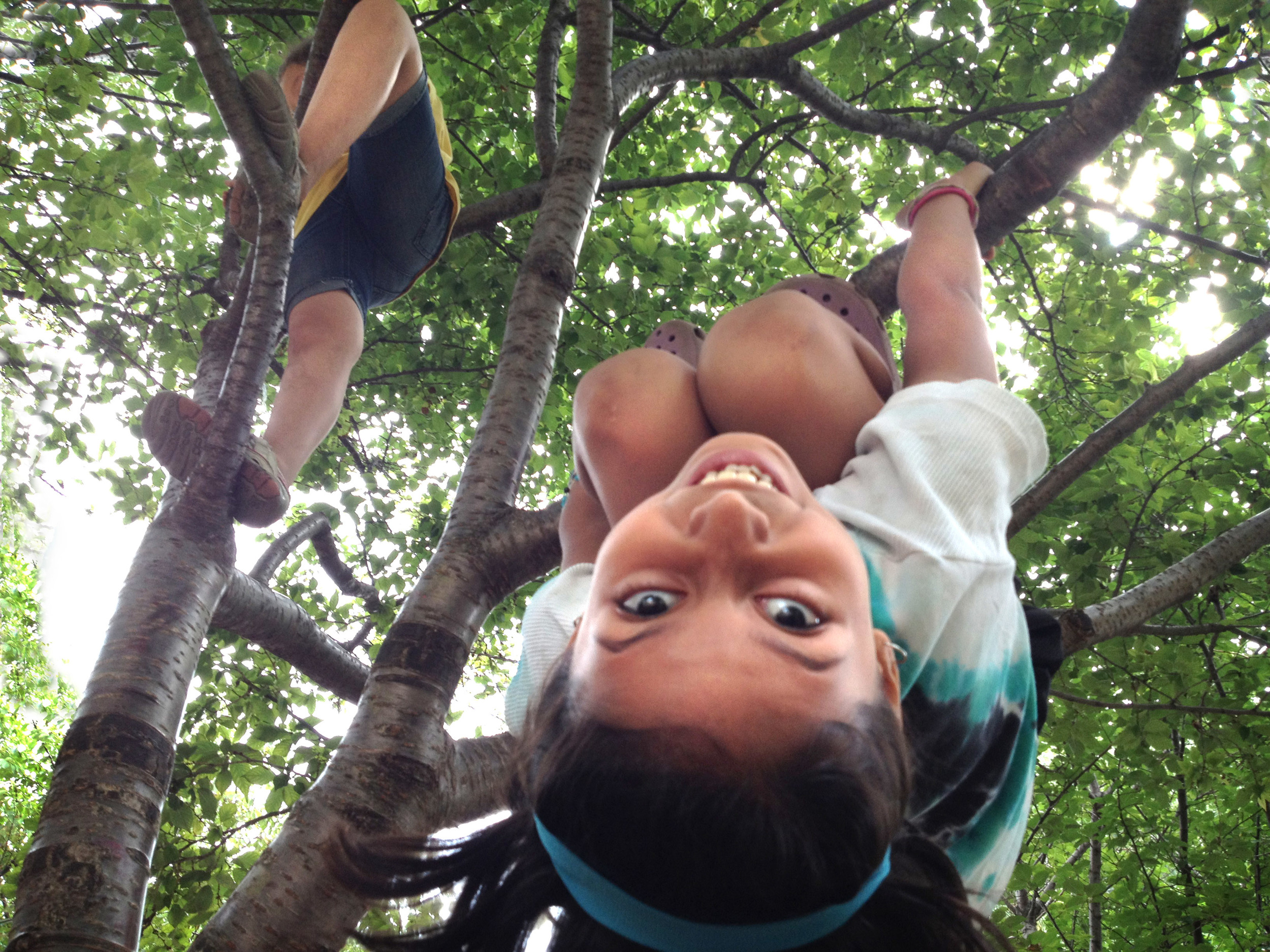 camp climb on cherry tree.jpg