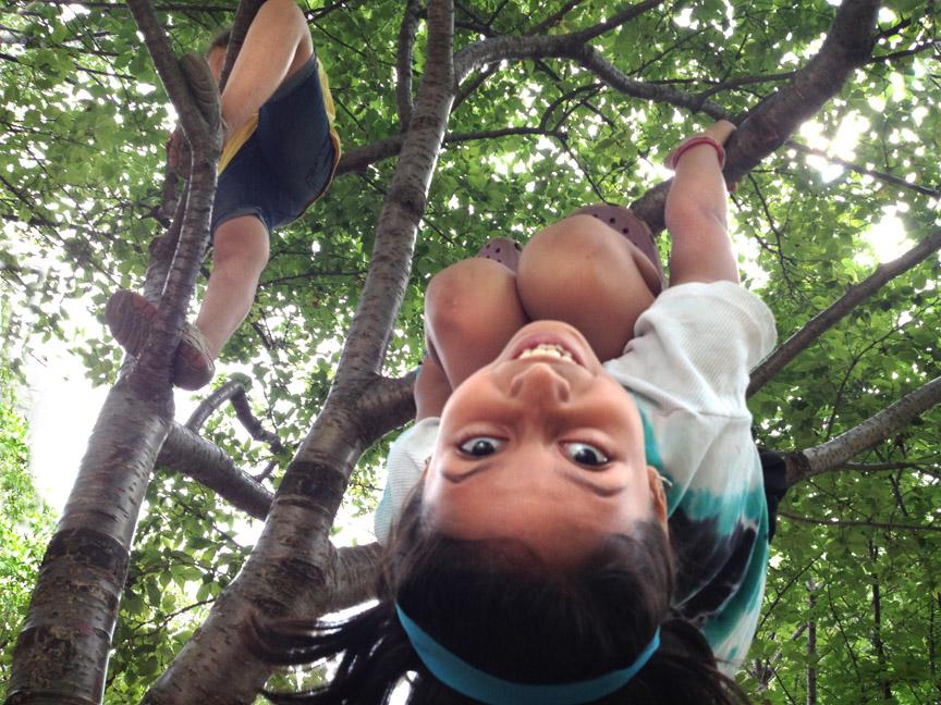 camp climb on cherry trees.jpg