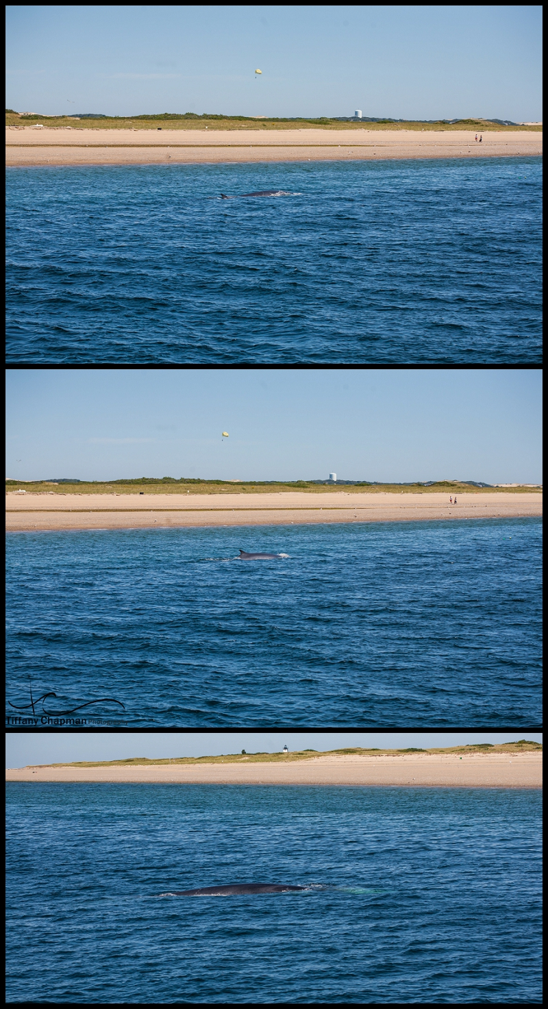 Our first whale of the day was right outside the harbor and so close near shore. A Fin Whale....