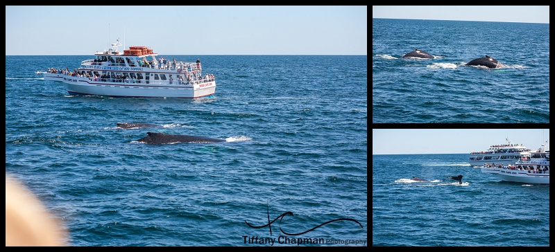 Our first sights of Humpback Whales in their own habitat...It was amazing!