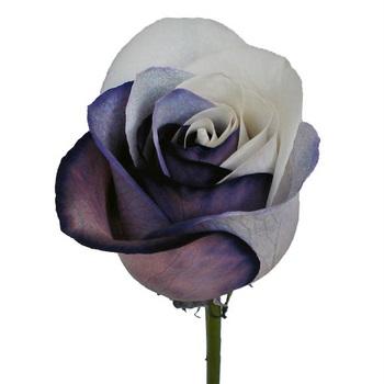 Black_White_Formal_Affair_Tinted_Roses_A_350-1.jpg