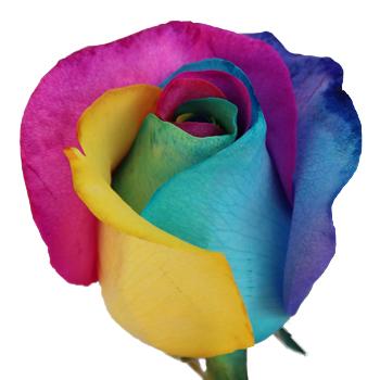 Rainbow-Rose-Yellow-Turq-Pink-Green1-350_8e143832.jpg