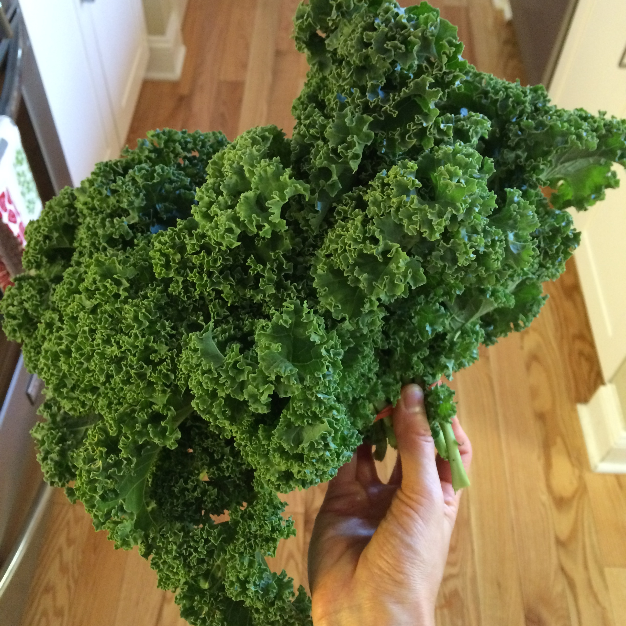 I picked up my kale at the farmers market! Make sure you rinse it really well if you are buying a big bunch like this.