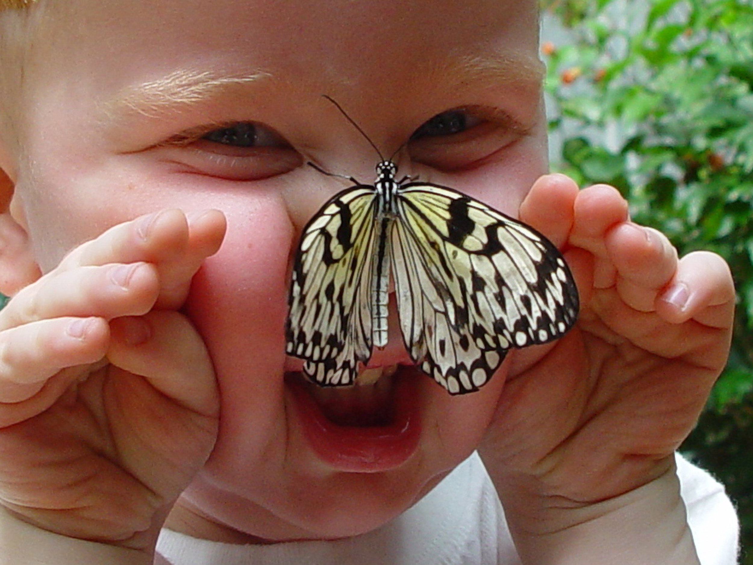 butterfly and child