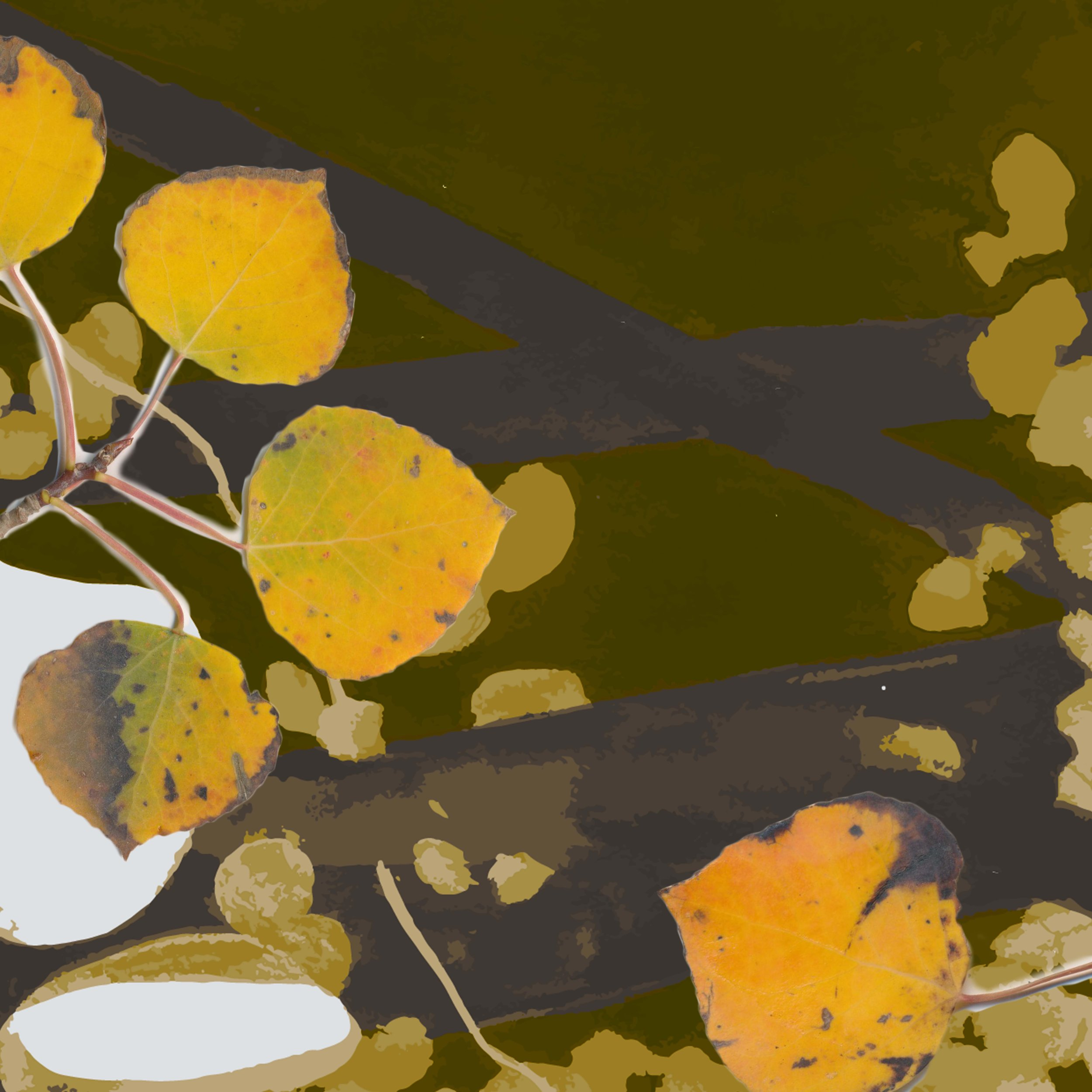 4-olive.jpg