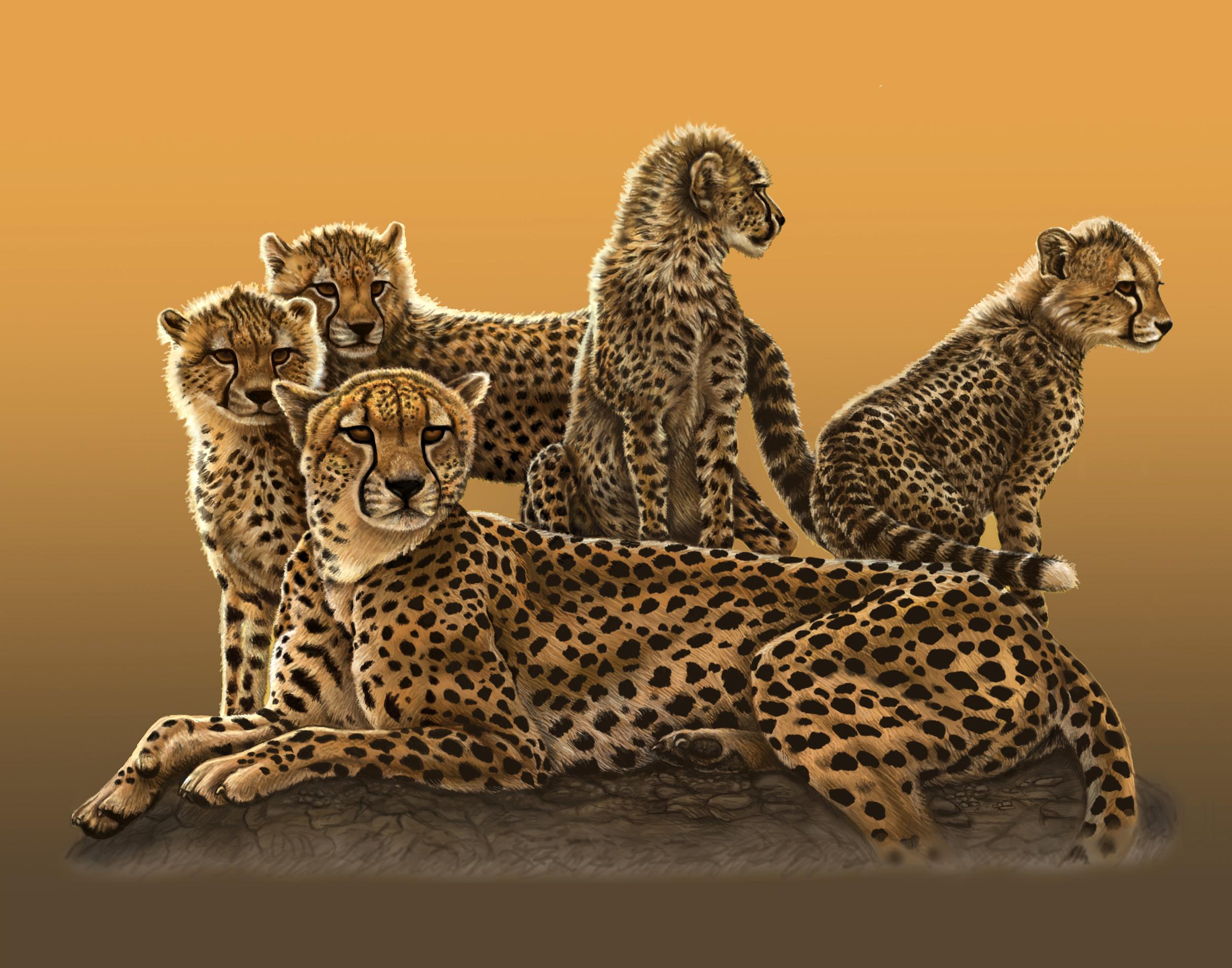 cheetah 11x14.jpg