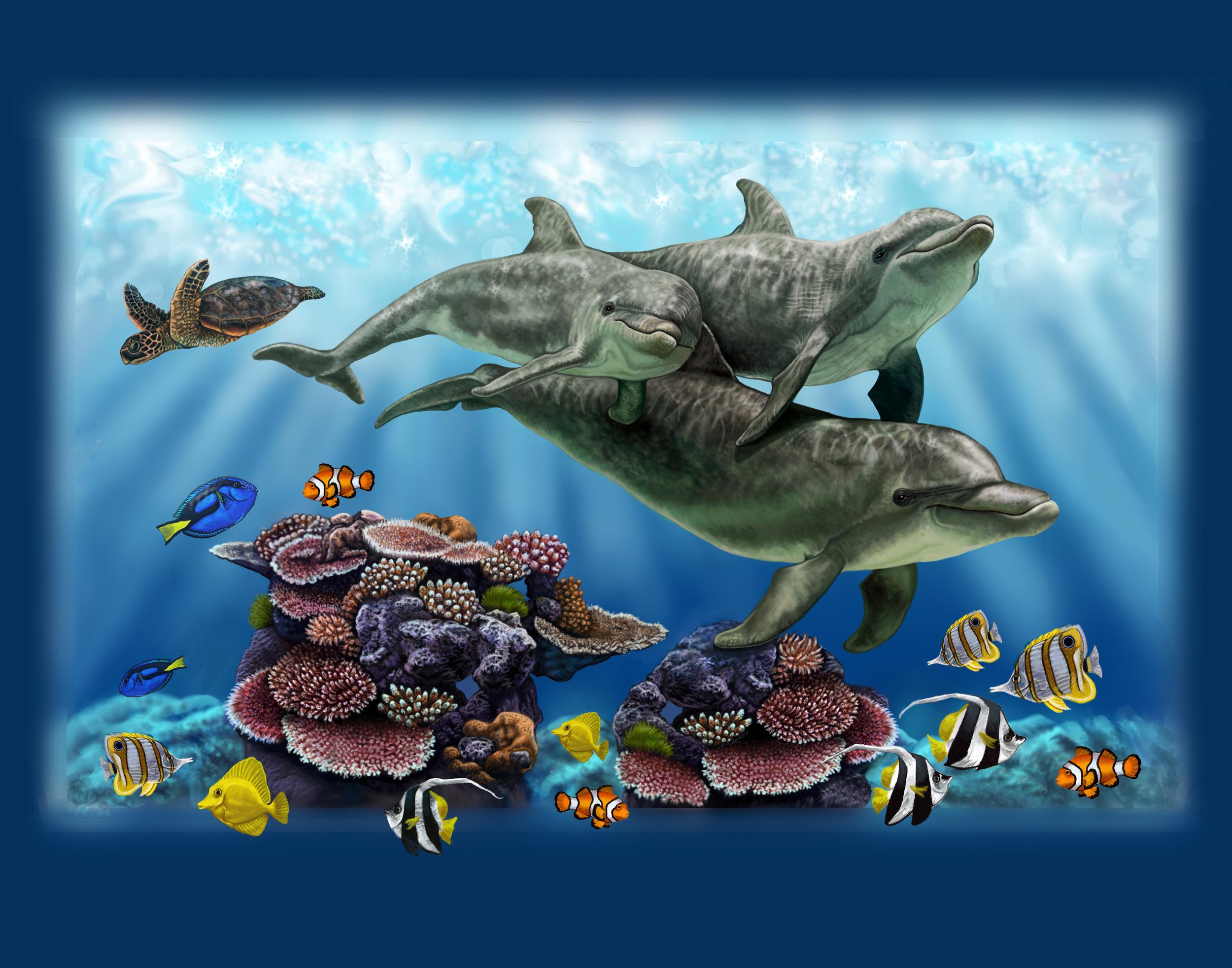 dolphin 11x14.jpg