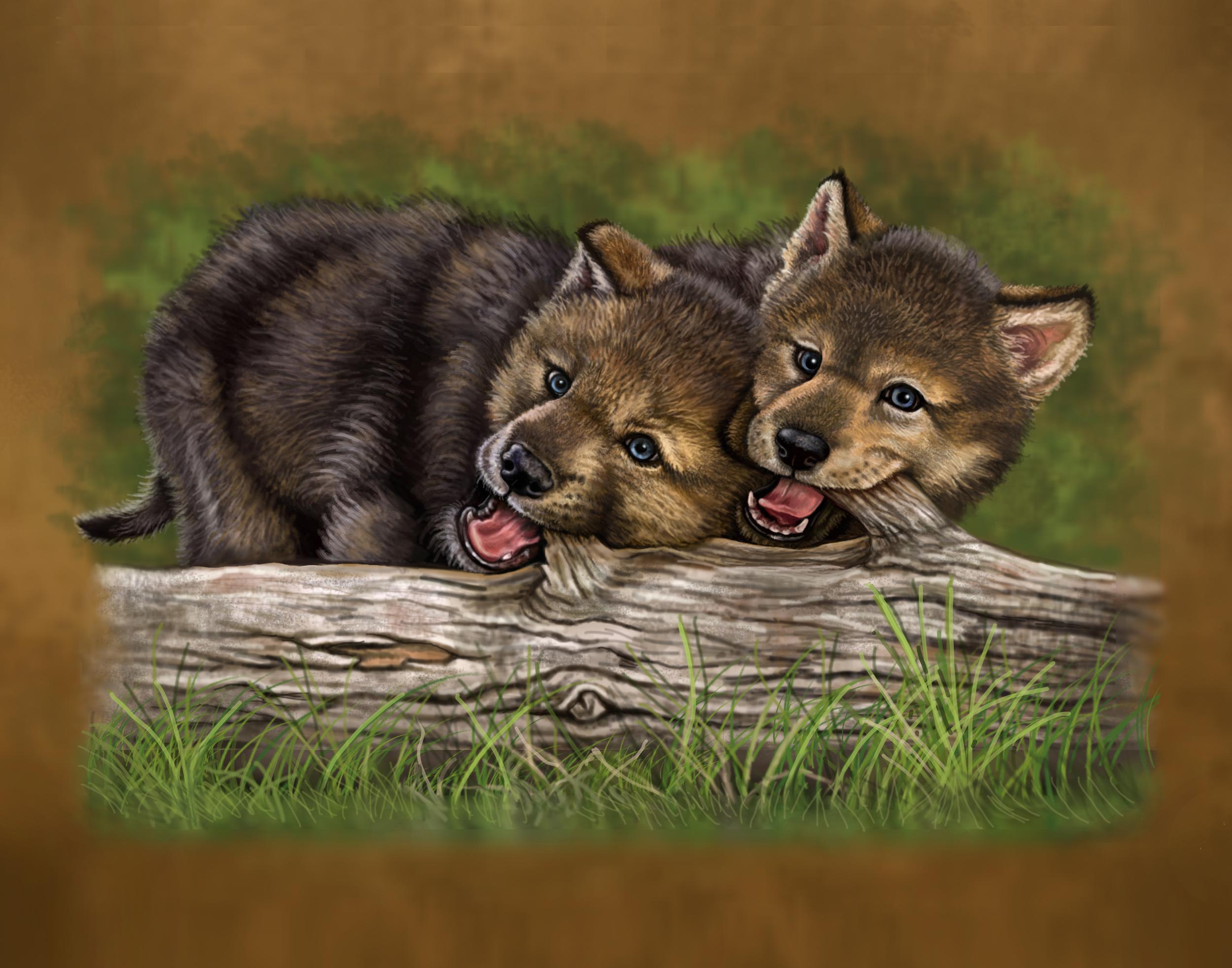 wolf 11x14.jpg