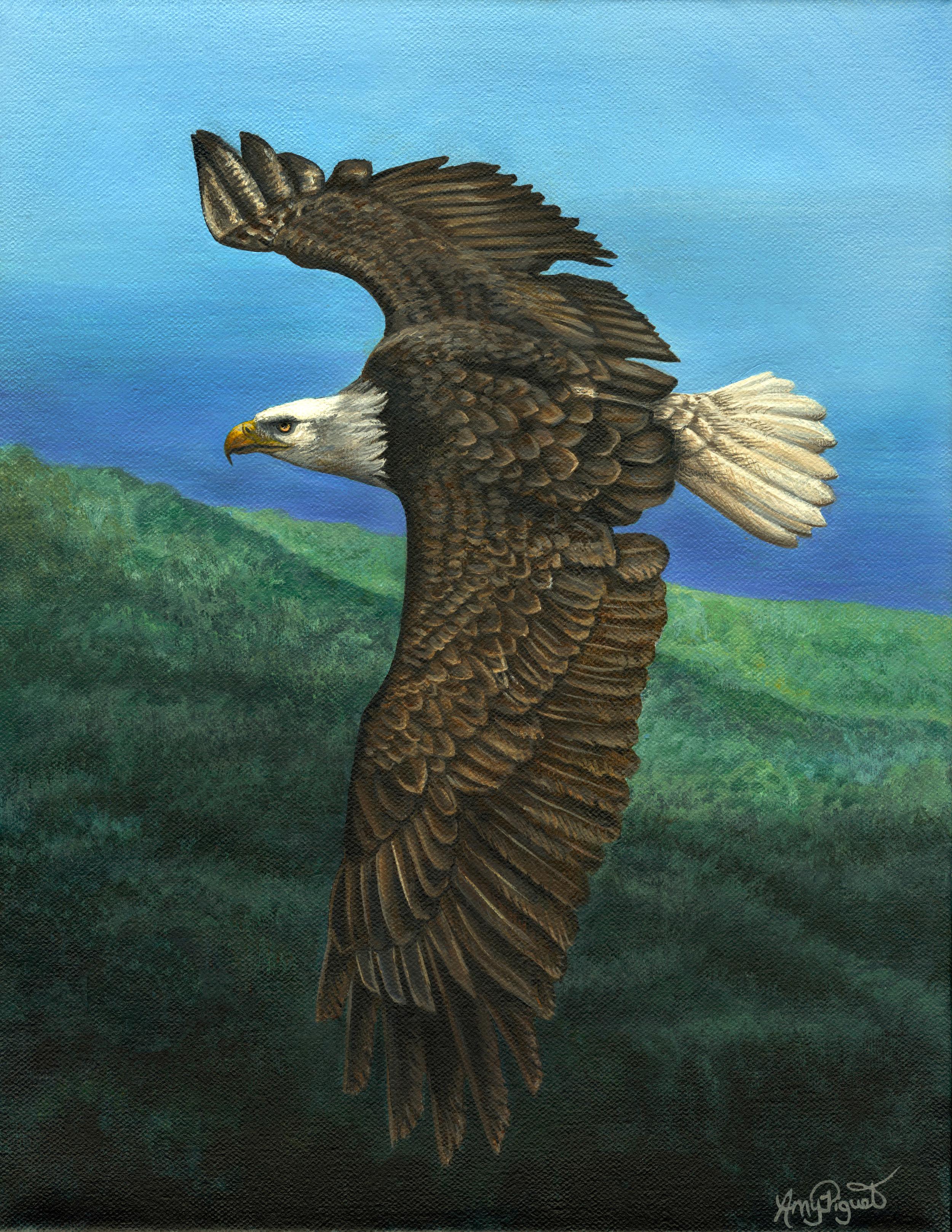eagle 11x14.jpg