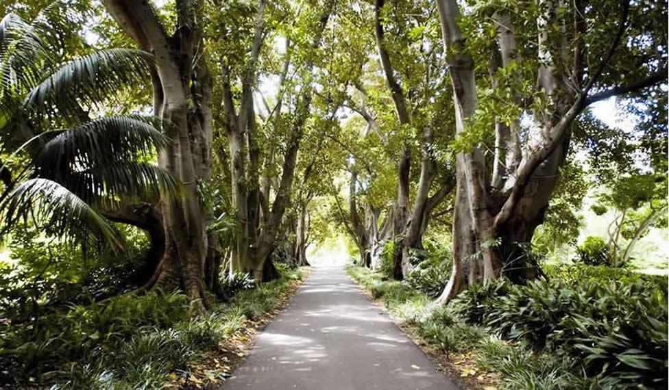 Adelaide Botanic Gardens -