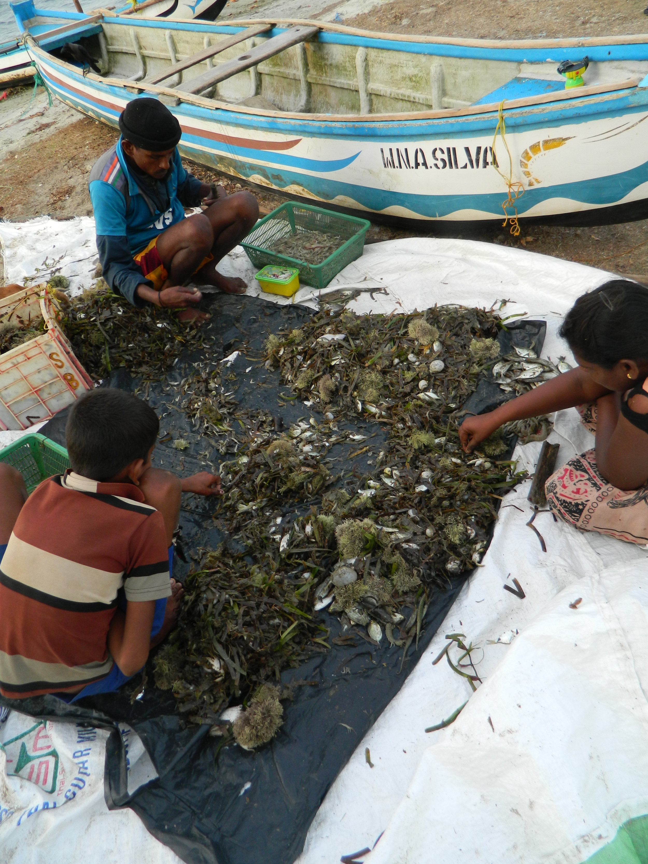 Sorting seagrass