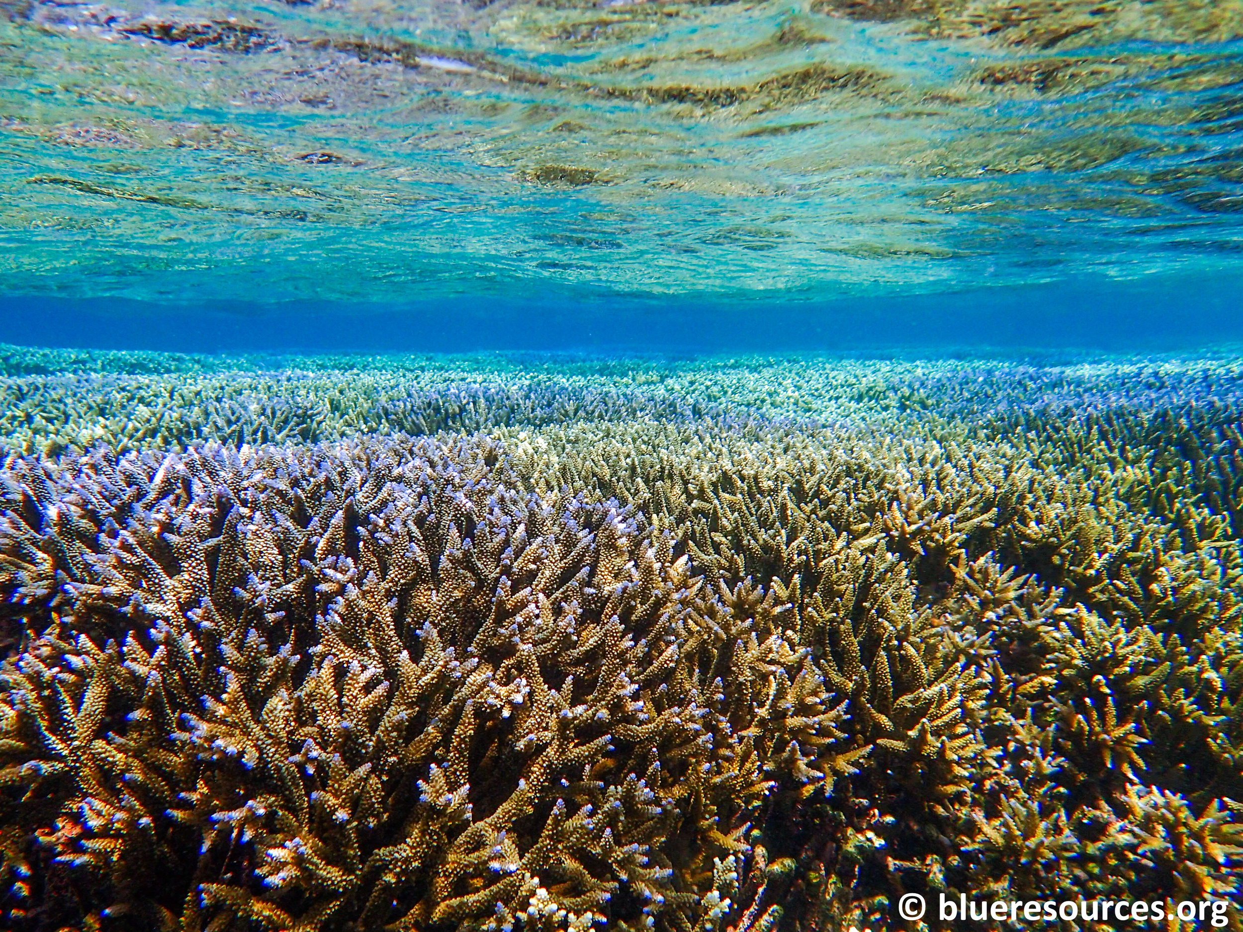 The corals of Pigeon Island Marine Protected Area