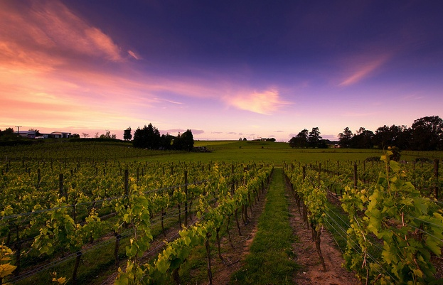 Wine region of Marlborough