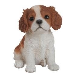 King Charles Puppy.jpg