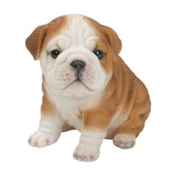 Bulldog Puppy.jpg