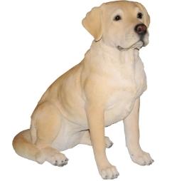 83302_Golden Labrador.jpg