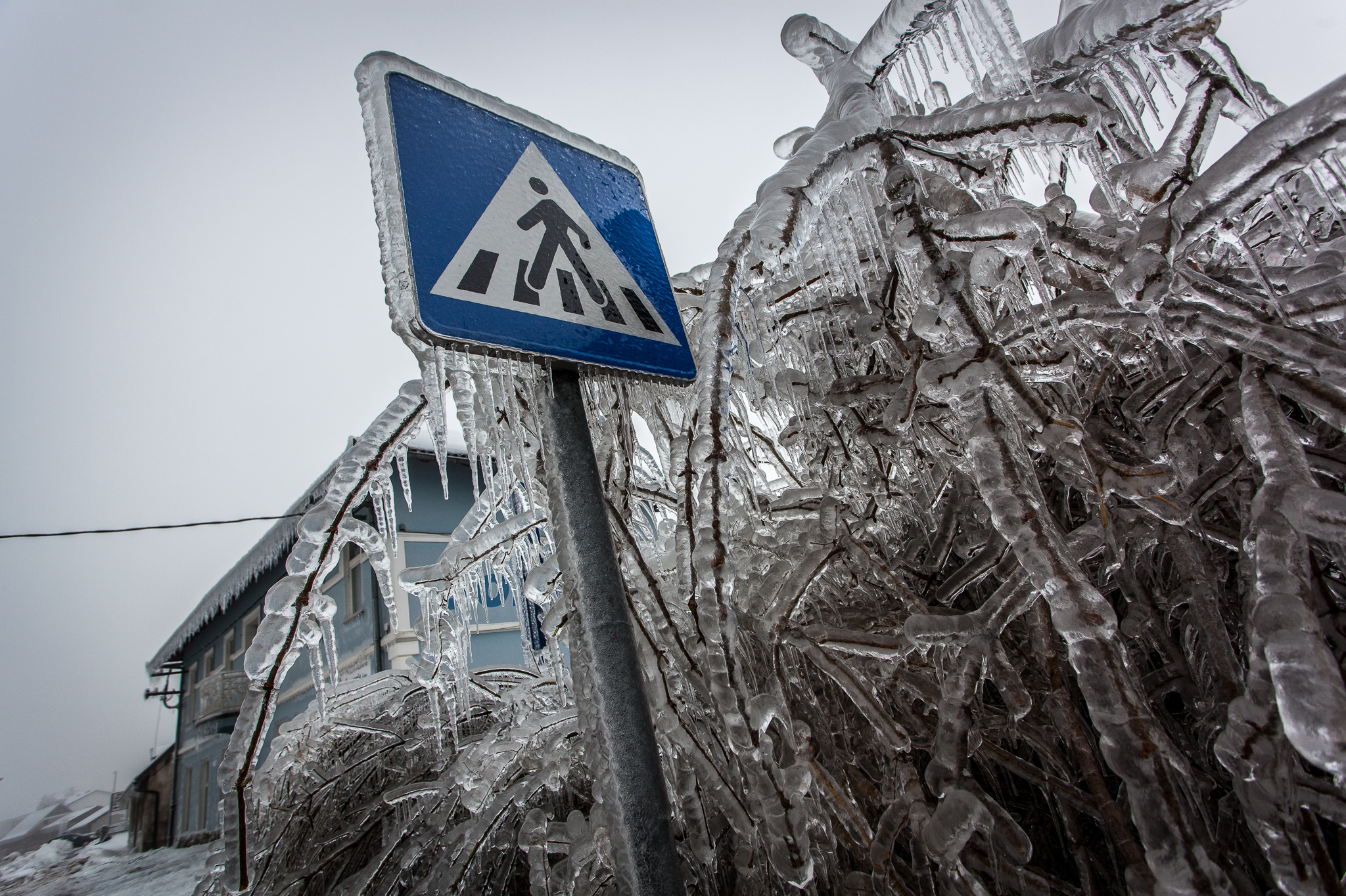 Pedestrian crossing sign covered with a few centimetres of ice.