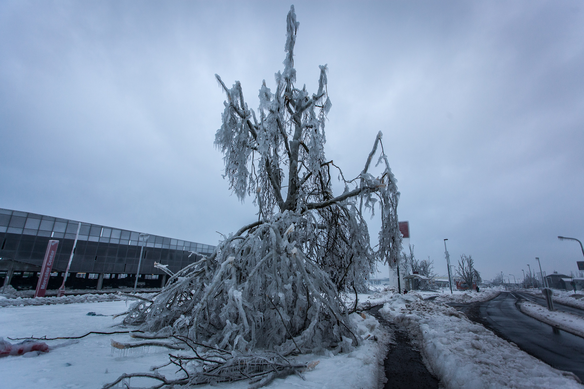 Almost completely broken tree whose branches are covered with at least 5 centimetres of ice.