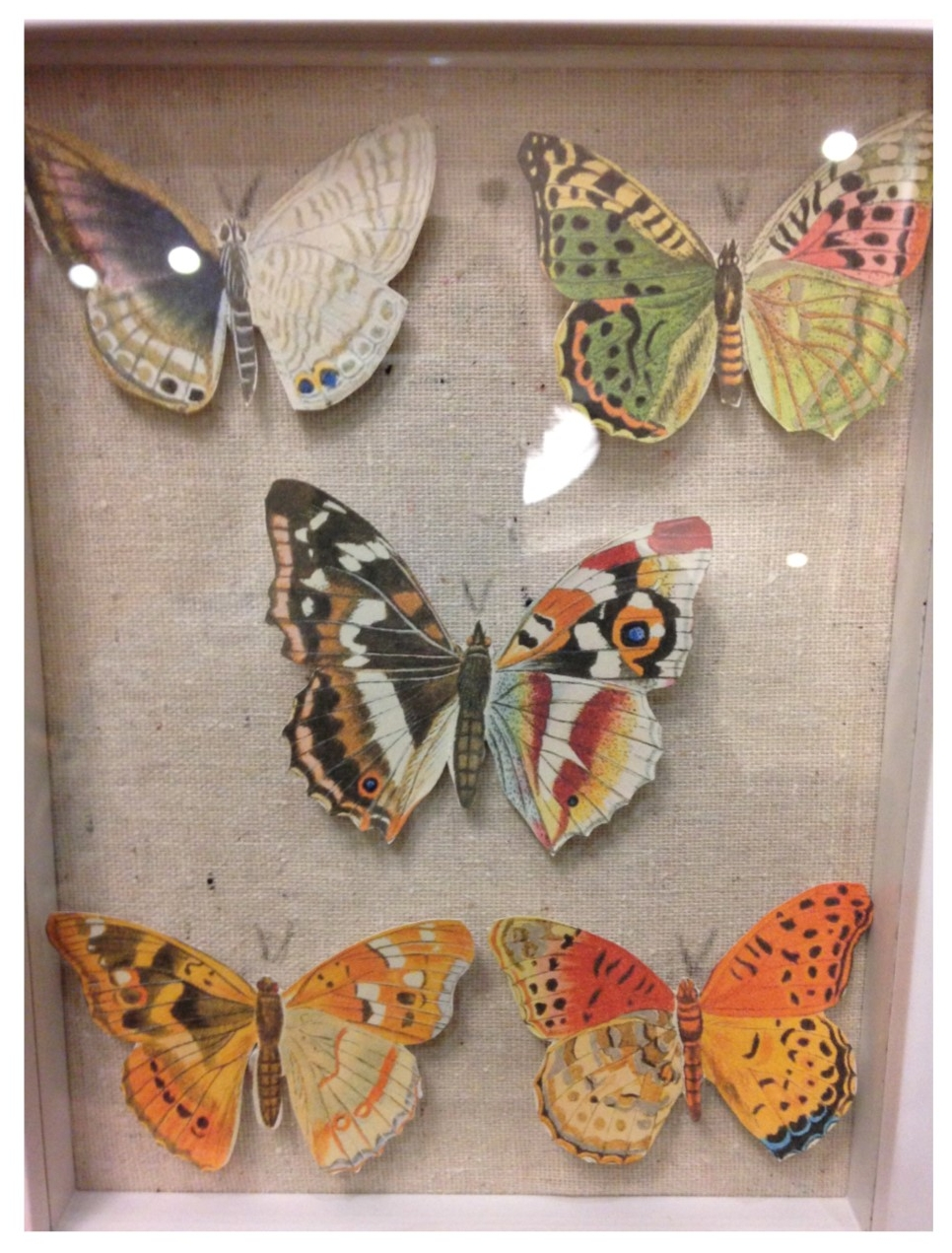 butterfly shadowbox.jpg