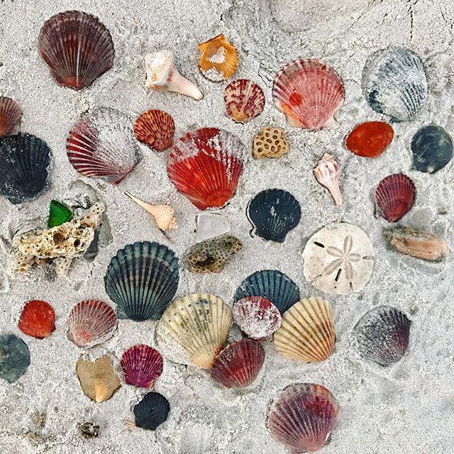 Salty Treasures 🙌🏻 #seashells #mermaidlife #allwhatsbeautiful #getoutside #lovewhereyoulive