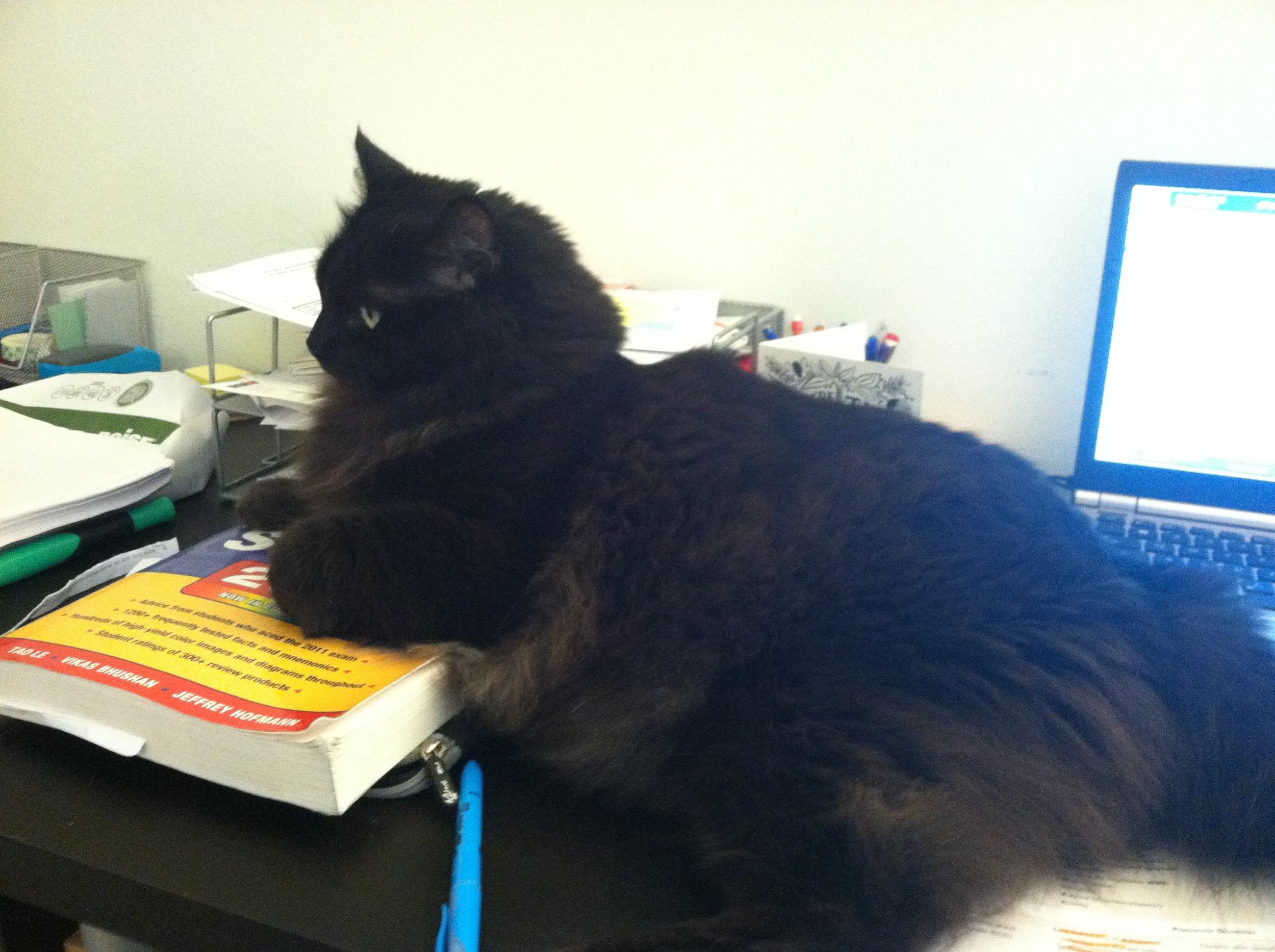 Dart helping me study.