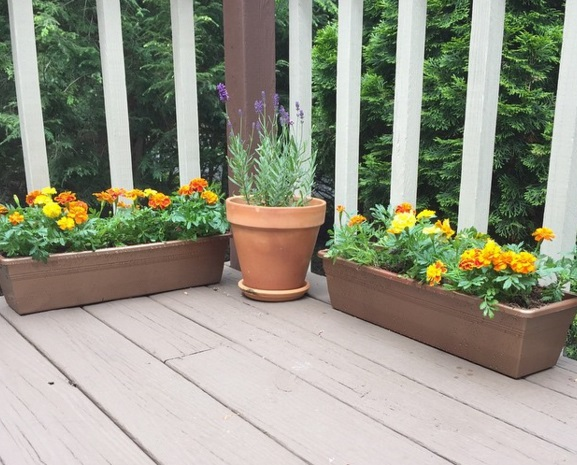 My little container garden on the deck.