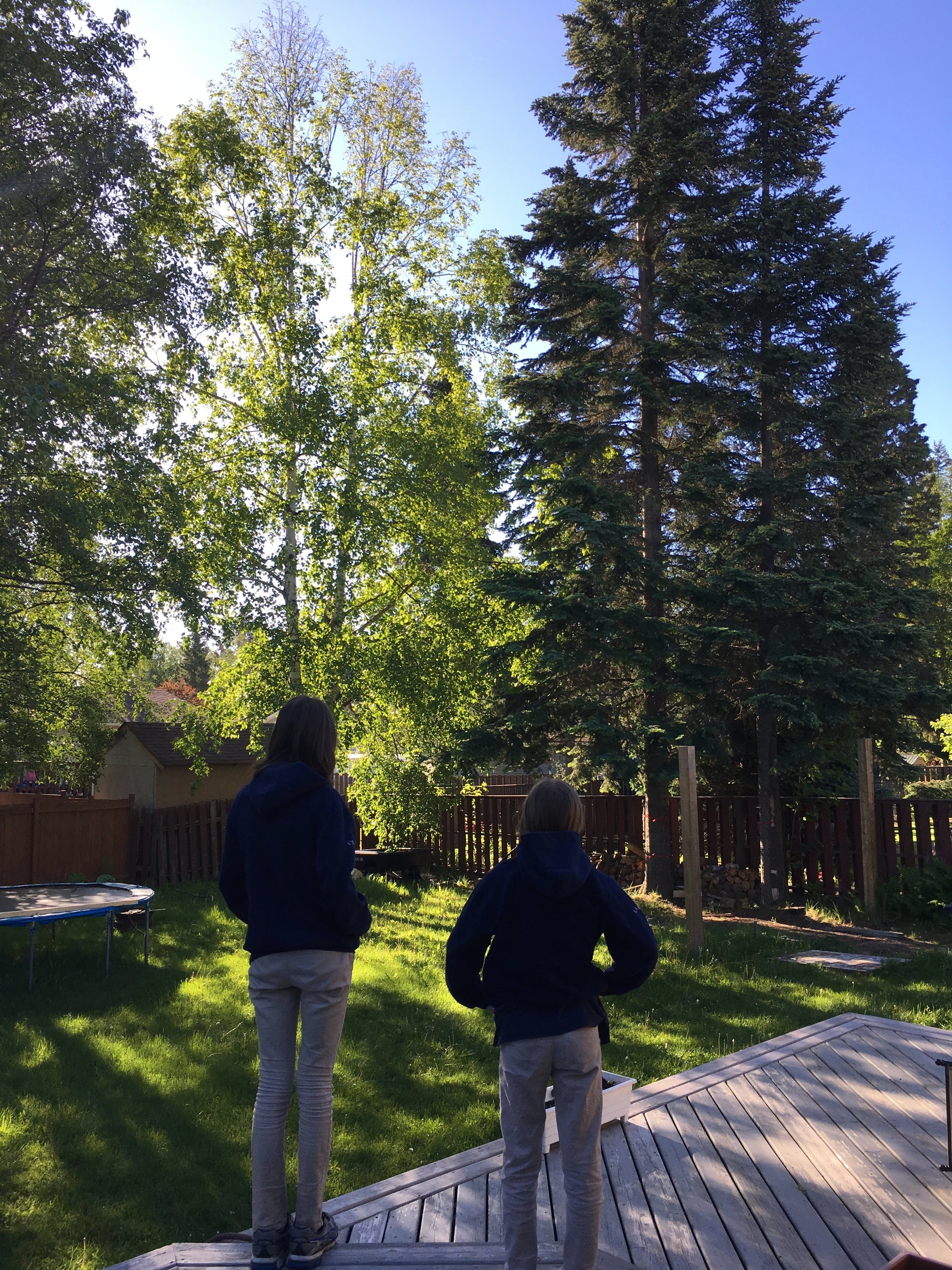 Goodbye Trees